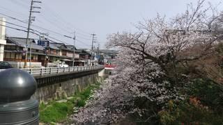 210401 水間寺さくら.jpg